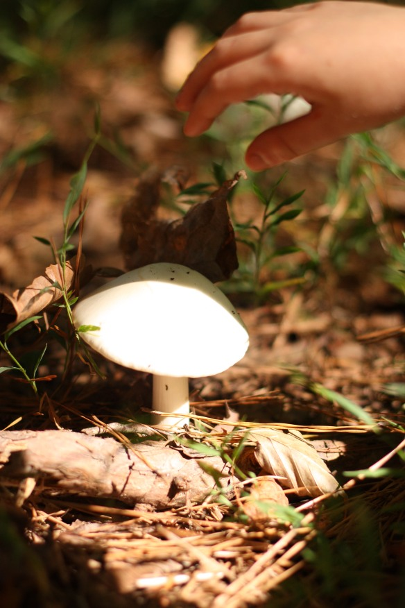 Non poisonous mushrooms