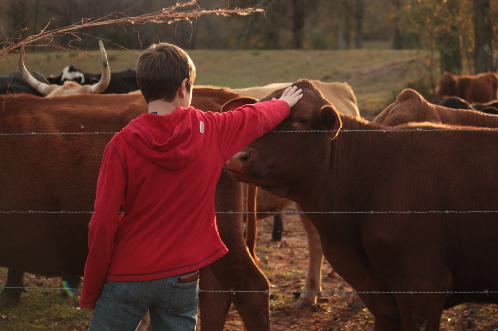 petting-the-cows