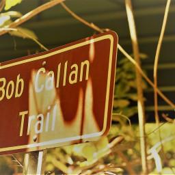 Cheap Field Trips # 3:  Bob's Trail