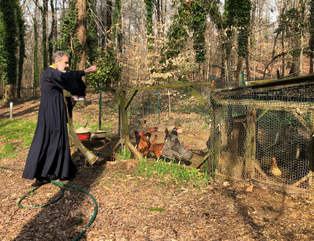 9353dc838fd After he blessed our home, he moved out to the chicken coop. So, now we  will be eating blessed eggs! I love this image ...