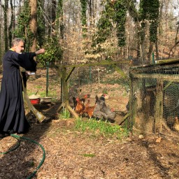 The Blessing of the Chickens