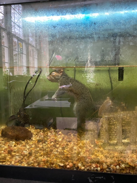 fish tank with squirrel