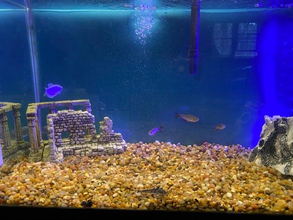 a healthy fish tank
